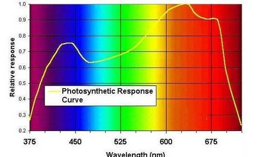 photosynthetic response curve