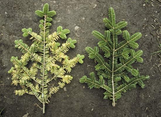 اثر آلودگی نوری بر گیاهان